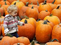 Just how long a pumpkin can last, carved or uncarved?